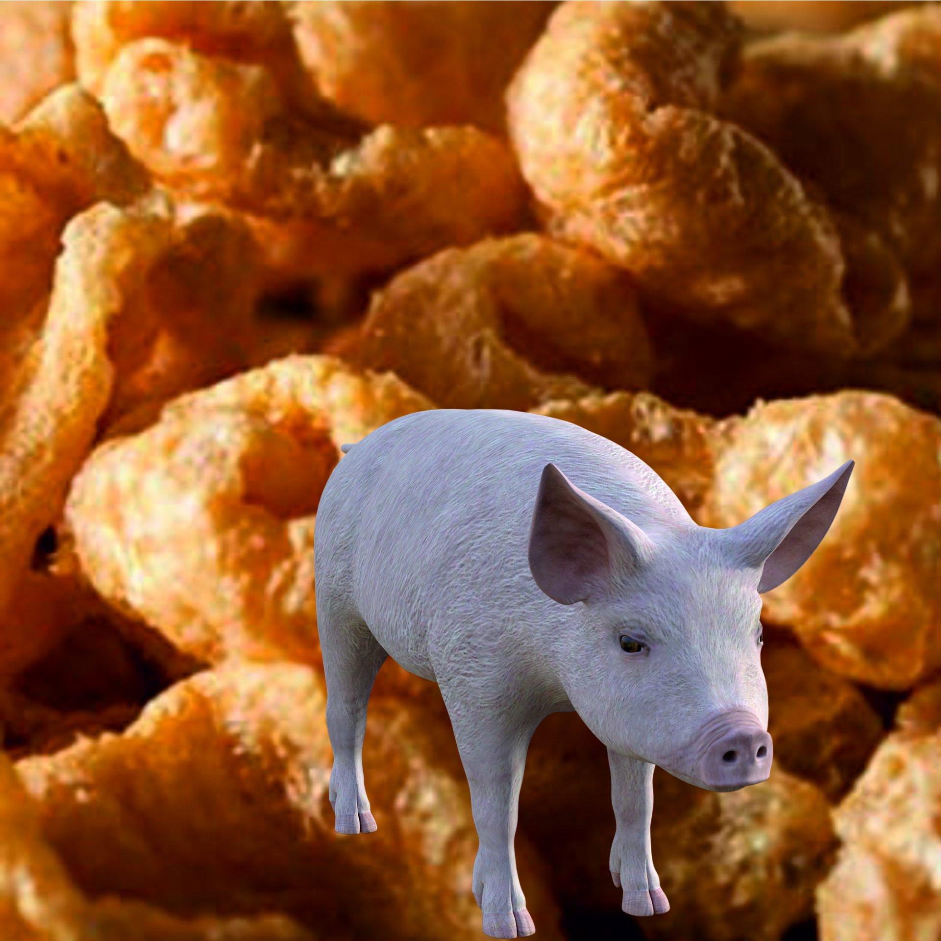 Corteza de cerdo